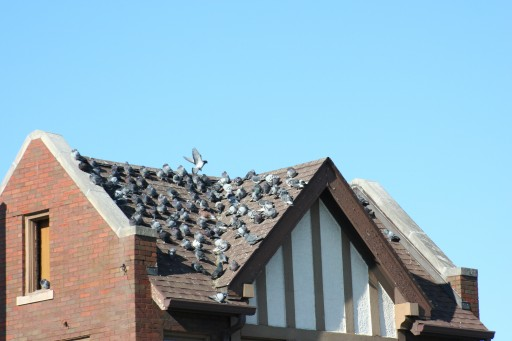 Nixalite of America Inc. Offers Tips on Protecting Your Home or Office From Migrating Birds