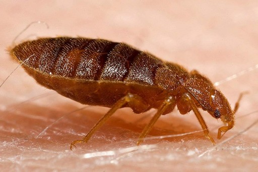 Nixalite of America Inc. Offers Tips on Avoiding Bedbugs While Traveling